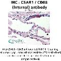 anti-C5AR1 antibody (Complement Component 5a Receptor 1) (Internal Region)