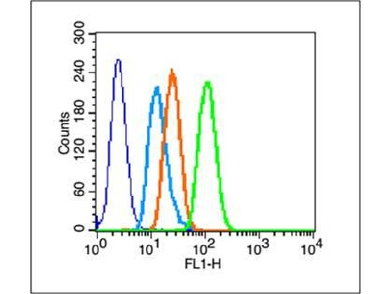 image for anti-Heat Shock 27kDa Protein 1 (HSPB1) (AA 100-150) antibody (ABIN672441)