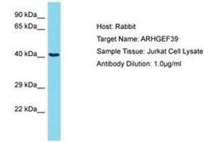 Image no. 1 for anti-Chromosome 9 Open Reading Frame 100 (C9orf100) (AA 172-221) antibody (ABIN6750707)