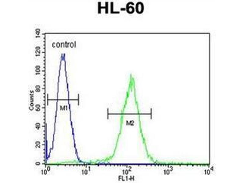 Image no. 1 for anti-Olfactory Receptor, Family 10, Subfamily J, Member 5 (OR10J5) (AA 250-278), (C-Term) antibody (ABIN953822)