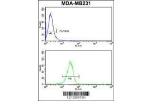 Flow Cytometry (FACS) image for anti-GRB2-Associated Binding Protein 2 (GAB2) (AA 3-30), (N-Term) antibody (ABIN1881358)