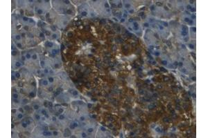 Image no. 2 for anti-Regenerating Islet Derived Protein 3 gamma (REG3g) (AA 39-175) antibody (ABIN5662401)