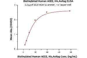 Image no. 3 for Angiotensin I Converting Enzyme 2 (ACE2) protein (His tag,AVI tag,Biotin) (ABIN6952431)
