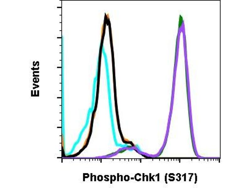 Flow Cytometry (FACS) image for anti-Checkpoint Kinase 1 (CHEK1) (pSer317) antibody (ABIN5671182)