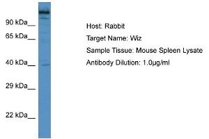 Image no. 1 for anti-Zinc Finger Protein 803 (ZNF803) (C-Term) antibody (ABIN2774982)