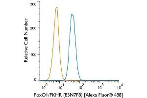 Flow Cytometry (FACS) image for anti-Forkhead Box O1 (FOXO1) antibody (ABIN4312371)