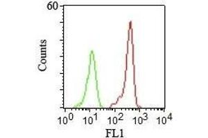 Image no. 2 for anti-CD46 Molecule, Complement Regulatory Protein (CD46) antibody (ABIN6940026)