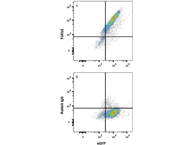 Flow Cytometry (FACS) image for anti-Toll-Like Receptor 12 (Tlr12) (AA 22-709) antibody (Alexa Fluor 647) (ABIN4896534)