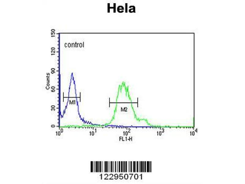 Flow Cytometry (FACS) image for anti-GABARAPL1 antibody (GABA(A) Receptor-Associated Protein Like 1) (ABIN653077)