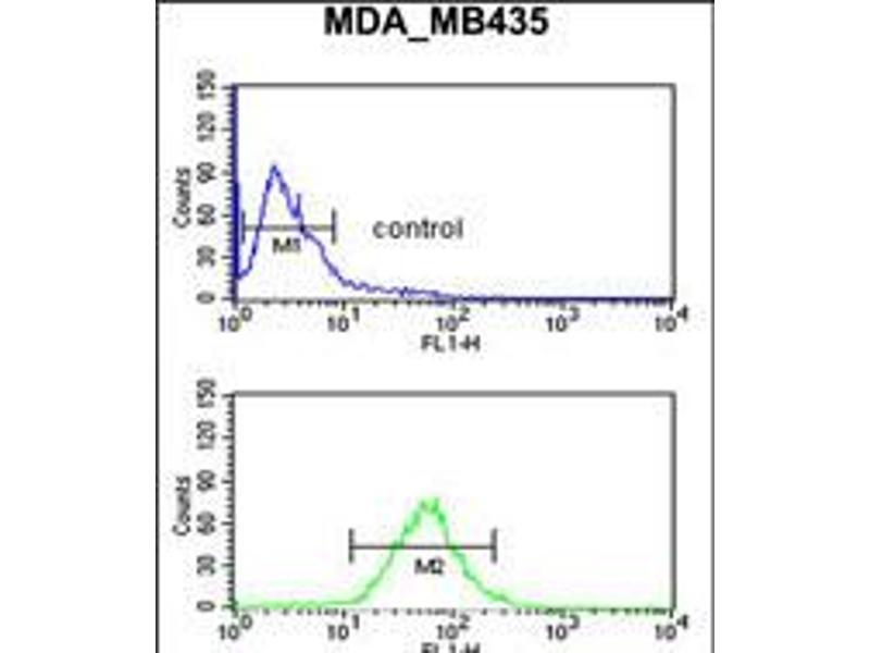 Image no. 2 for anti-Gonadotropin-Releasing Hormone 2 (GnRH2) (AA 26-53) antibody (ABIN5536546)