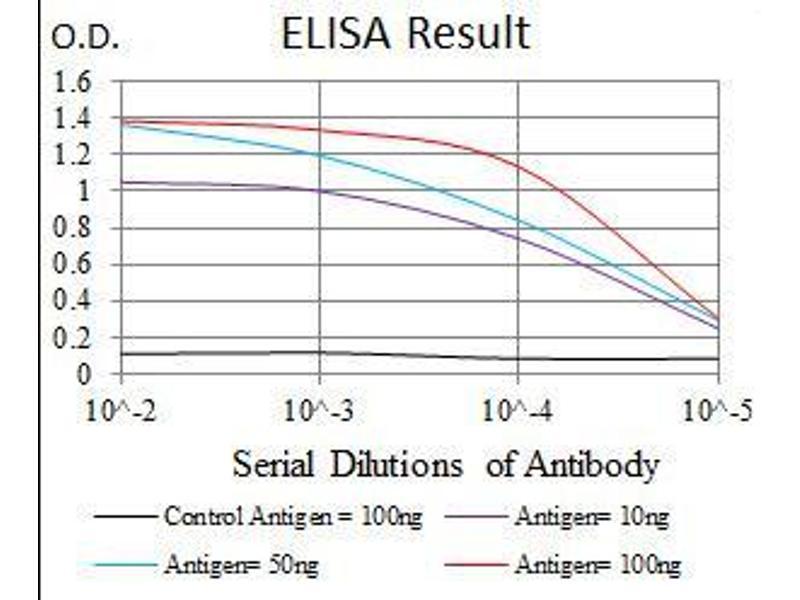 ELISA image for anti-MBP antibody (ABIN969279)