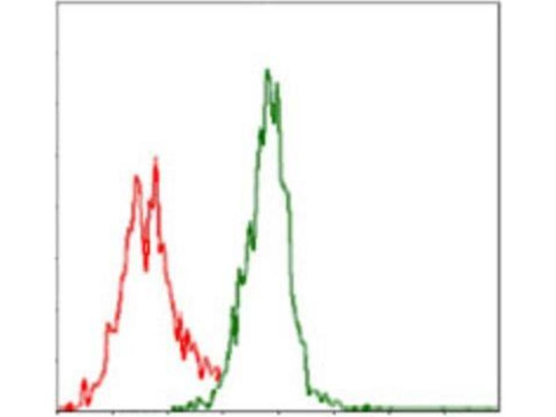 Flow Cytometry (FACS) image for anti-Argininosuccinate Synthase 1 (ASS1) antibody (ABIN1845465)