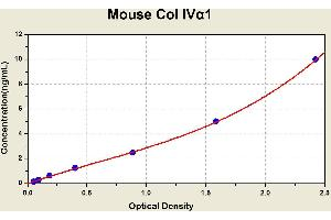 Image no. 1 for Collagen, Type IV, alpha 1 (COL4A1) ELISA Kit (ABIN1114259)