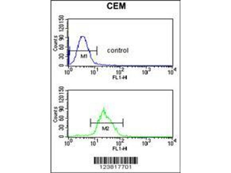 Flow Cytometry (FACS) image for anti-Inositol-Trisphosphate 3-Kinase C (ITPKC) (AA 89-117), (N-Term) antibody (ABIN653274)