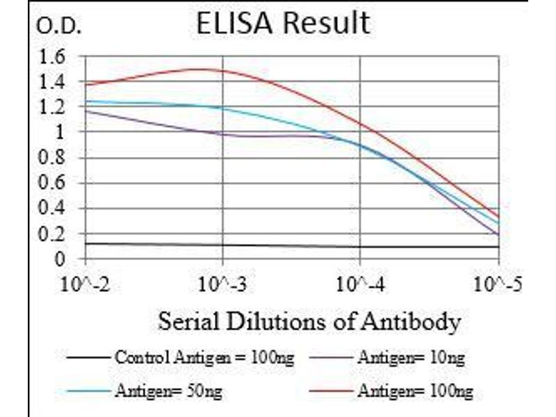 Image no. 4 for anti-gamma-aminobutyric Acid (GABA) B Receptor, 2 (GABBR2) (AA 319-483) antibody (ABIN1724938)