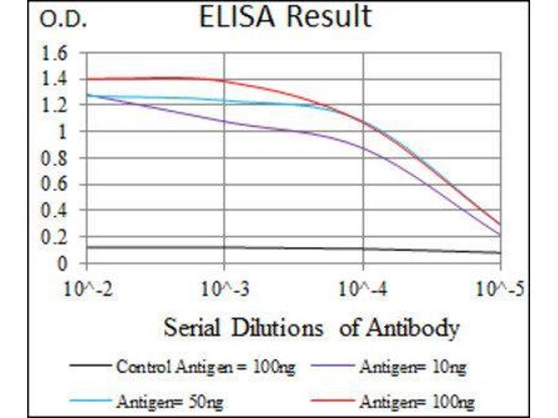Image no. 6 for anti-Mitochondrial Ribosomal Protein L42 (MRPL42) (AA 10-142) antibody (ABIN1844263)