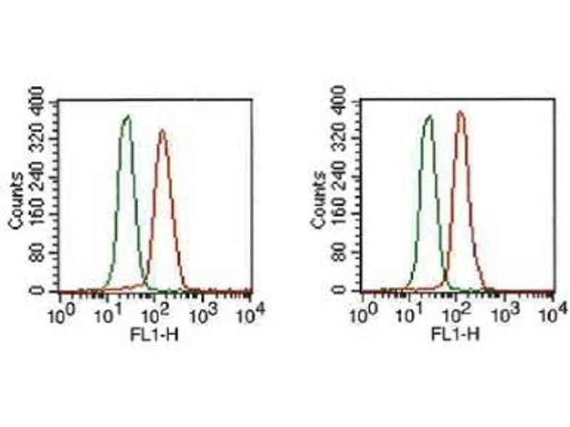 Flow Cytometry (FACS) image for anti-Fibroblast Growth Factor Receptor 1 (FGFR1) (Isoform beta) antibody (ABIN250616)