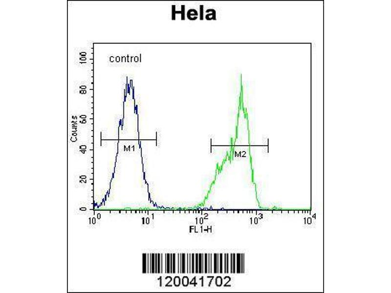 Flow Cytometry (FACS) image for anti-TYSY (AA 265-294), (C-Term) antibody (ABIN1881964)