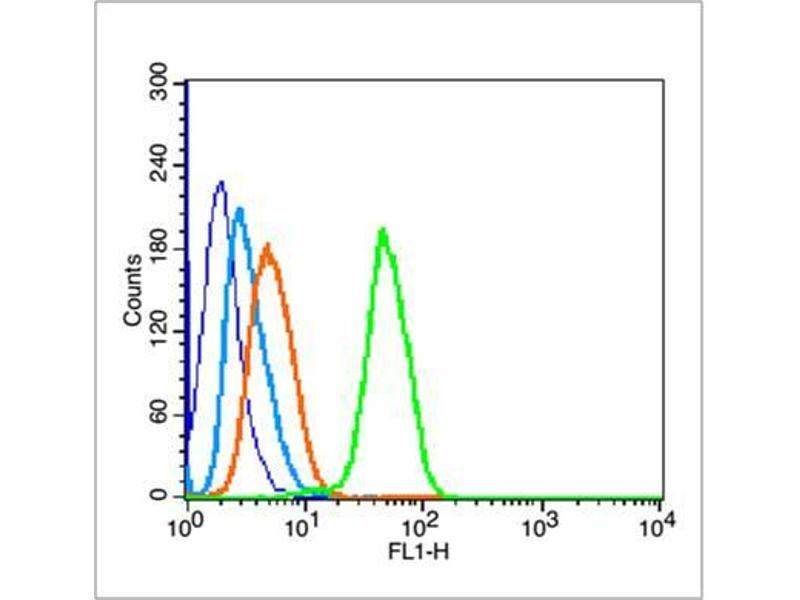 image for anti-Tumor Protein P53 (TP53) (AA 345-390), (Wild Type) antibody (ABIN677408)