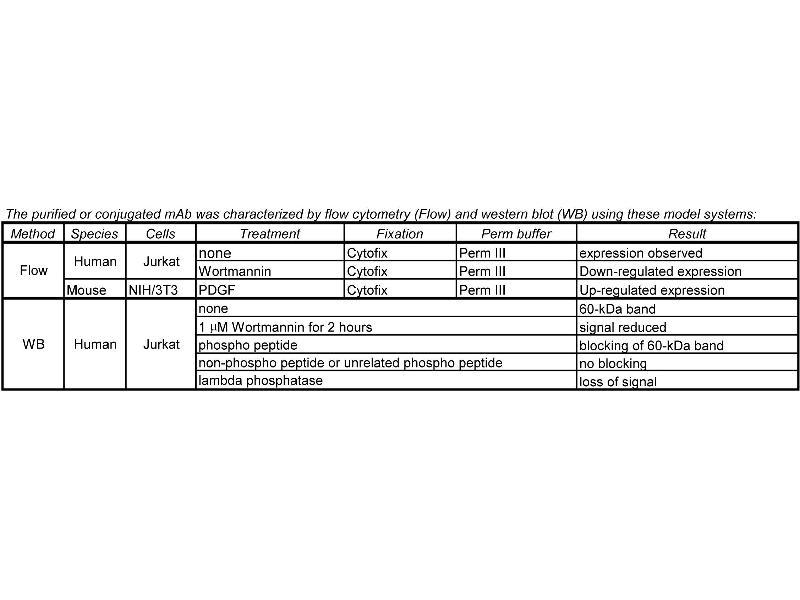 image for anti-AKT antibody (V-Akt Murine Thymoma Viral Oncogene Homolog 1) (pSer473) (ABIN967668)
