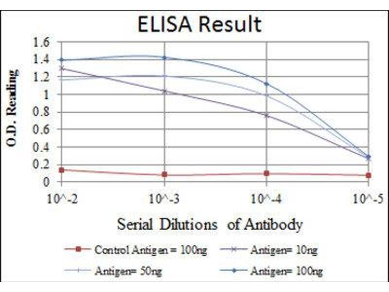 ELISA image for anti-Heat Shock 27kDa Protein 1 (HSPB1) antibody (ABIN1845754)