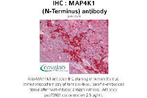 image for anti-Mitogen-Activated Protein Kinase Kinase Kinase Kinase 1 (MAP4K1) (N-Term) antibody (ABIN1736729)