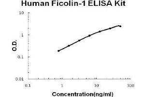 Image no. 1 for Ficolin (Collagen/fibrinogen Domain Containing) 1 (FCN1) ELISA Kit (ABIN1889408)
