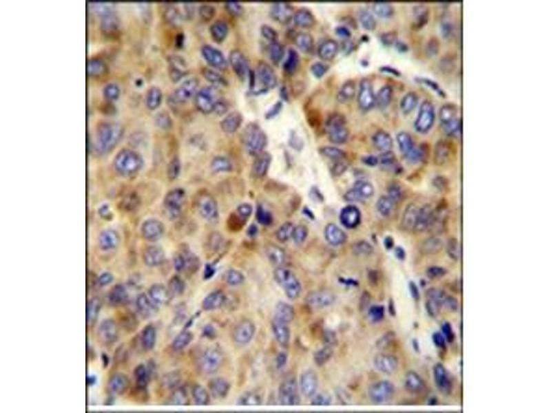 Immunohistochemistry (Paraffin-embedded Sections) (IHC (p)) image for anti-Collagen Type XVIII alpha 1 Chain (AA 1314-1343), (Chain alpha 1), (Middle Region) antibody (ABIN951630)