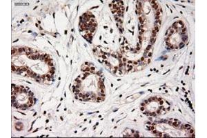 Immunohistochemistry (Paraffin-embedded Sections) (IHC (p)) image for anti-Neurotrophin 4 (NTF4) antibody (ABIN4340785)