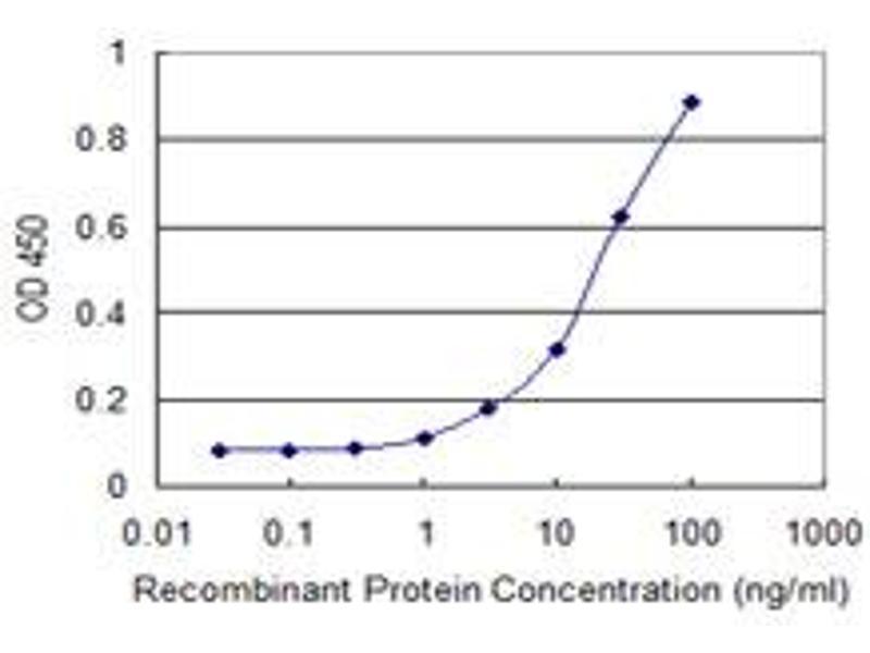 Anti-HIPK2 Antibody (AA 961-1065)