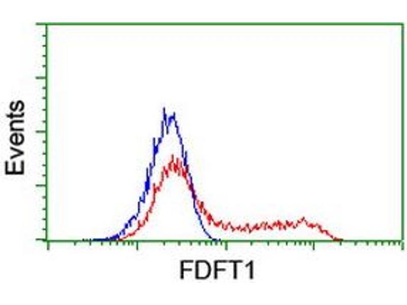 image for anti-Farnesyl-Diphosphate Farnesyltransferase 1 (FDFT1) antibody (ABIN1498242)