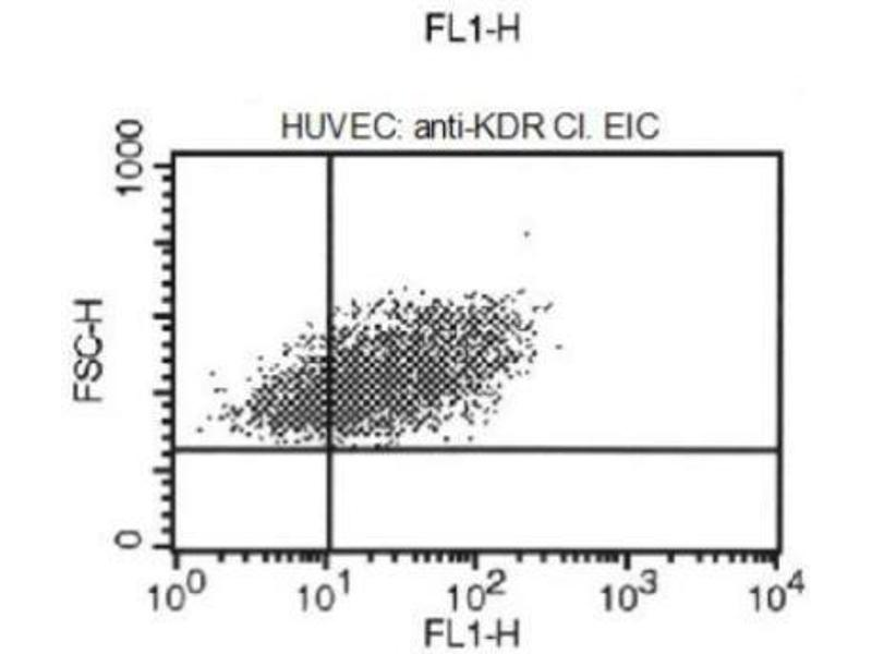 Flow Cytometry (FACS) image for anti-VEGFR2 antibody (Kinase insert Domain Receptor (A Type III Receptor tyrosine Kinase))  (Biotin) (ABIN251446)