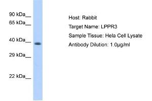 Image no. 1 for anti-Lipid Phosphate Phosphatase-Related Protein Type 3 (LPPR3) (Middle Region) antibody (ABIN2783957)
