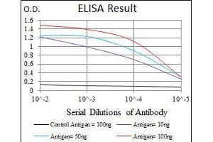anti-Maternal Embryonic Leucine Zipper Kinase (MELK) (AA 637-651) antibody
