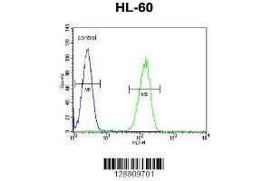 Image no. 1 for anti-G Protein-Coupled Receptor 142 (GPR142) (AA 86-114), (N-Term) antibody (ABIN655207)