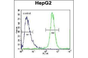 Image no. 1 for anti-F-Box Protein 2 (FBXO2) (AA 244-271), (C-Term) antibody (ABIN5534267)