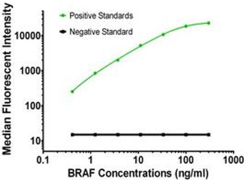 Luminex Assay (LMNX) image for anti-BRAF antibody (V-Raf Murine Sarcoma Viral Oncogene Homolog B1) (ABIN2672313)