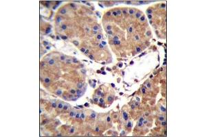 Image no. 1 for anti-serum Amyloid A-Like 1 (SAAL1) (AA 364-393), (C-Term) antibody (ABIN954661)