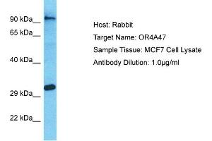 Image no. 1 for anti-Olfactory Receptor, Family 4, Subfamily A, Member 47 (OR4A47) (C-Term) antibody (ABIN2791732)