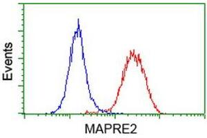 Image no. 6 for anti-Microtubule-Associated Protein, RP/EB Family, Member 2 (MAPRE2) antibody (ABIN1499321)