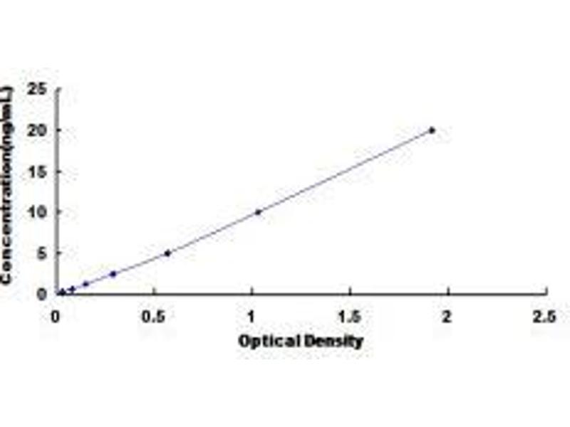 Replication Protein A1, 70kDa (RPA1) ELISA Kit
