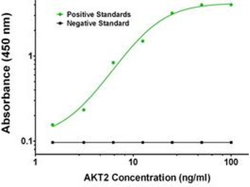 ELISA image for anti-AKT2 antibody (V-Akt Murine Thymoma Viral Oncogene Homolog 2) (ABIN2671838)