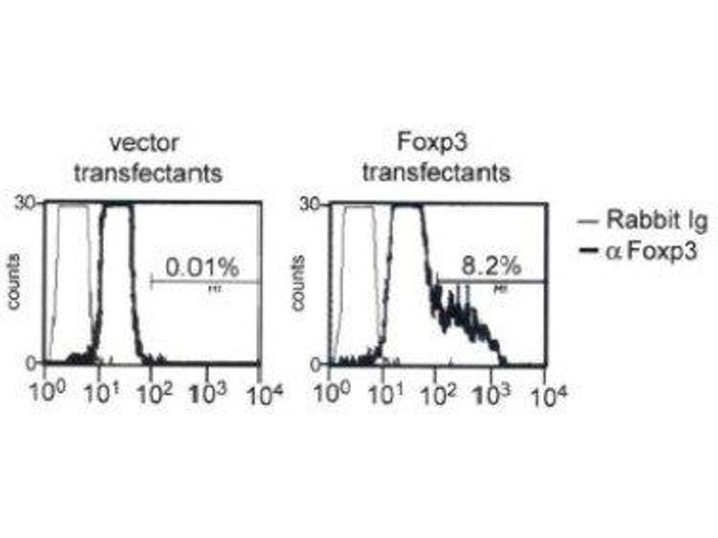 Image no. 2 for anti-Forkhead Box P3 (FOXP3) antibody (ABIN188539)