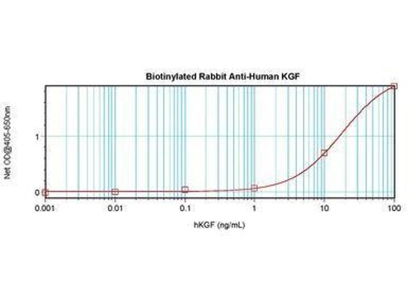 image for anti-FGF7 antibody (Fibroblast Growth Factor 7)  (Biotin) (ABIN464856)