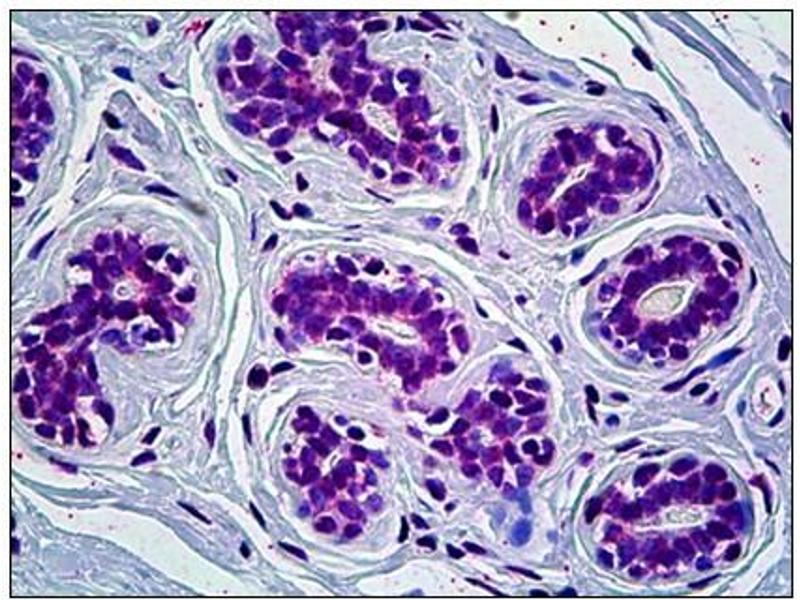Immunohistochemistry (IHC) image for anti-Cryptochrome 1 (Photolyase-Like) (CRY1) antibody (ABIN781975)