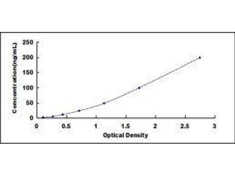 2',5'-Oligoadenylate Synthetase 1, 40/46kDa (OAS1) ELISA Kit