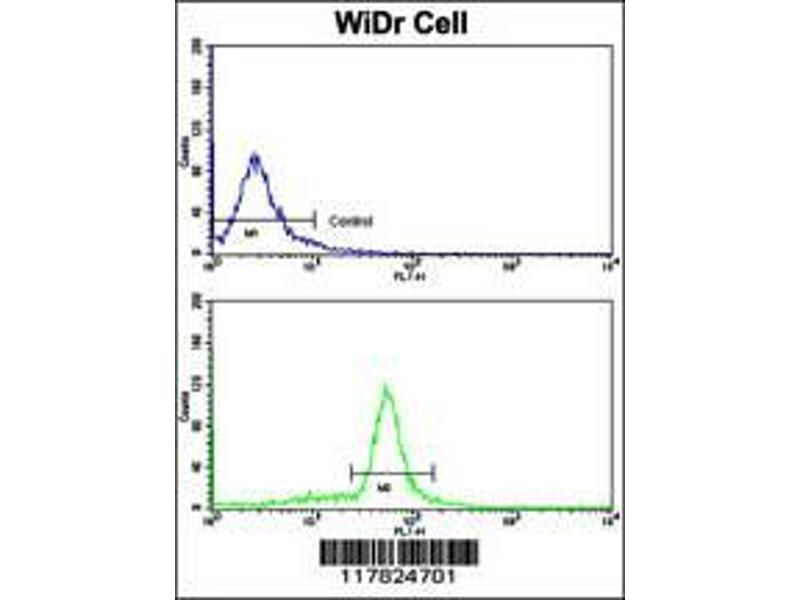 Flow Cytometry (FACS) image for anti-Villin 1 (VIL1) (AA 180-207), (N-Term) antibody (ABIN390742)