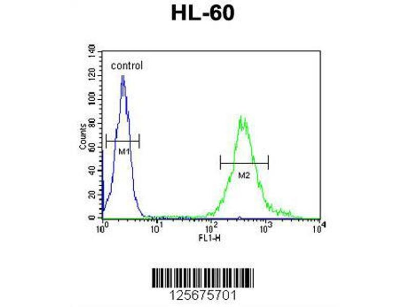 Flow Cytometry (FACS) image for anti-M11D1 (AA 88-116), (N-Term) antibody (ABIN653932)