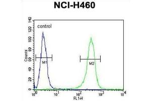 Image no. 2 for anti-Zinc Finger Protein 473 (ZNF473) antibody (ABIN3004304)