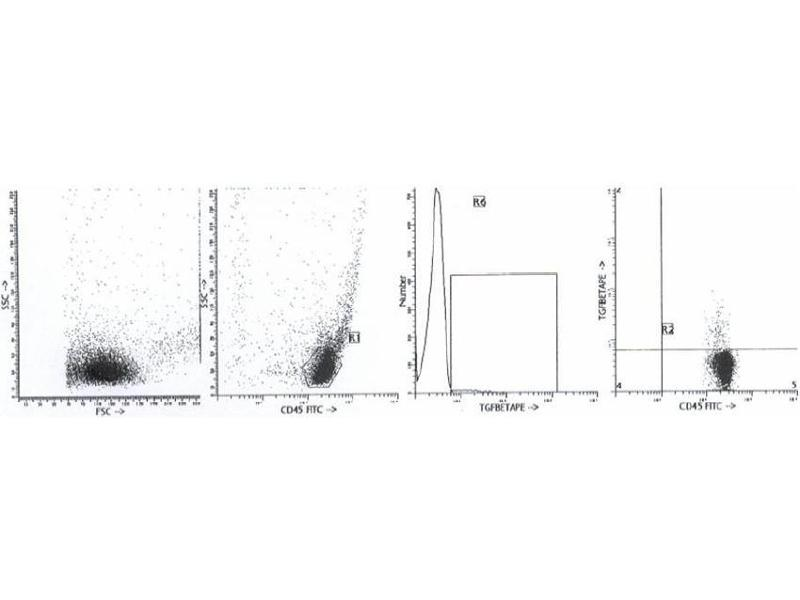 image for anti-TGFB1 antibody (Transforming Growth Factor, beta 1) (ABIN1109227)
